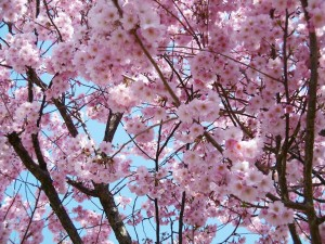 27.4.23森林博物館さんぽ07